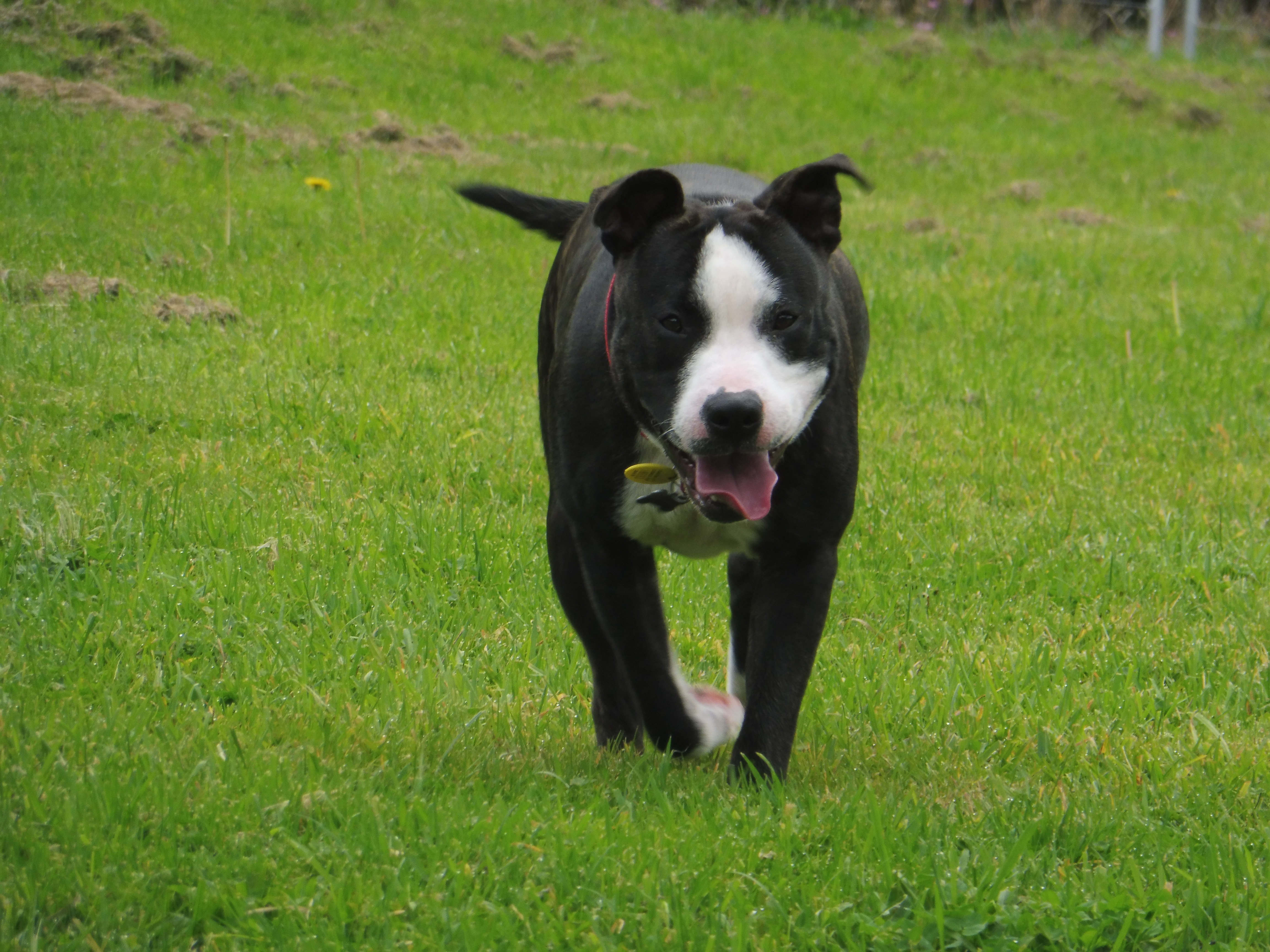 Blaze – ON HOLD – AWAITING TRIAL