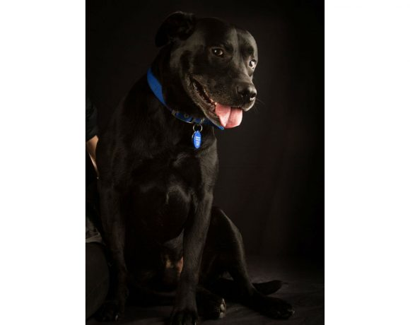 BUDDY – AVAILABLE FOR ADOPTION