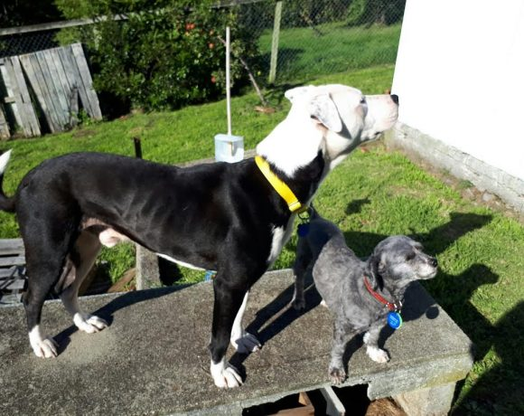 ROCKY – ON HOLD AWAITING TRIAL