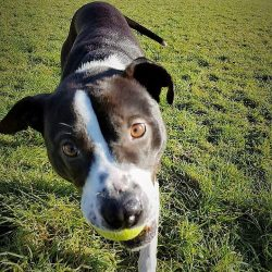 Billy – AVAILABLE FOR ADOPTION