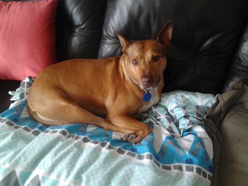 TIA – AVAILABLE FOR ADOPTION