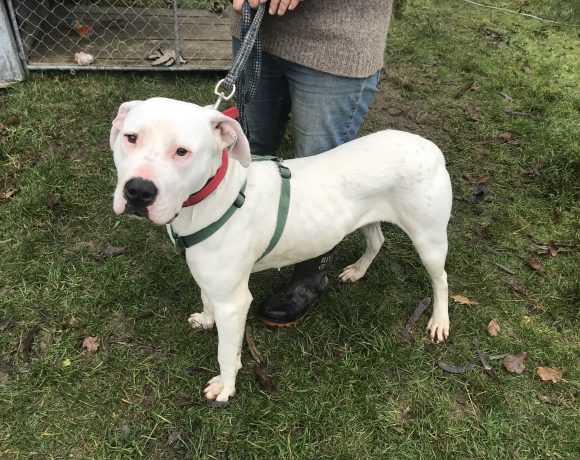 BLAZE – AVAILABLE FOR ADOPTION