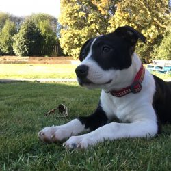 BUSTER – ON ADOPTION TRIAL
