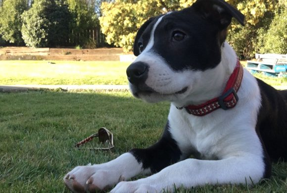 BUSTER – Available for adoption