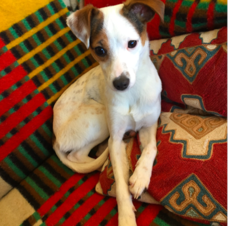 PIPPIN – ON ADOPTION TRIAL