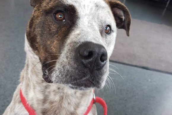 BRONX – AVAILABLE FOR ADOPTION