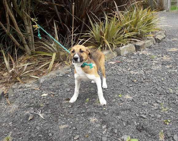 RALPHY – ON ADOPTION TRIAL