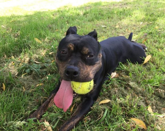 STELLA – ON HOLD PENDING ADOPTION TRIAL