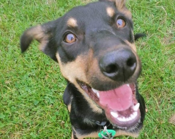 ROO – AVAILABLE FOR ADOPTION
