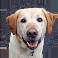 Dog Rescue Dunedin - Foster