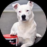 Dog Rescue Dunedin - Donate