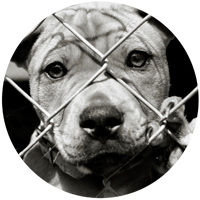 Dog rescue Dunedin - Dogs in DCC Pound