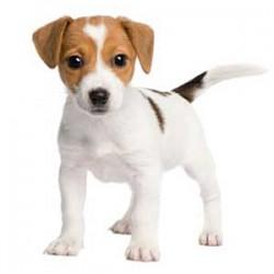Dunedin Dog Rescue Sponsor