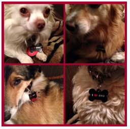 Dog Rescue Dunedin - Dog tags